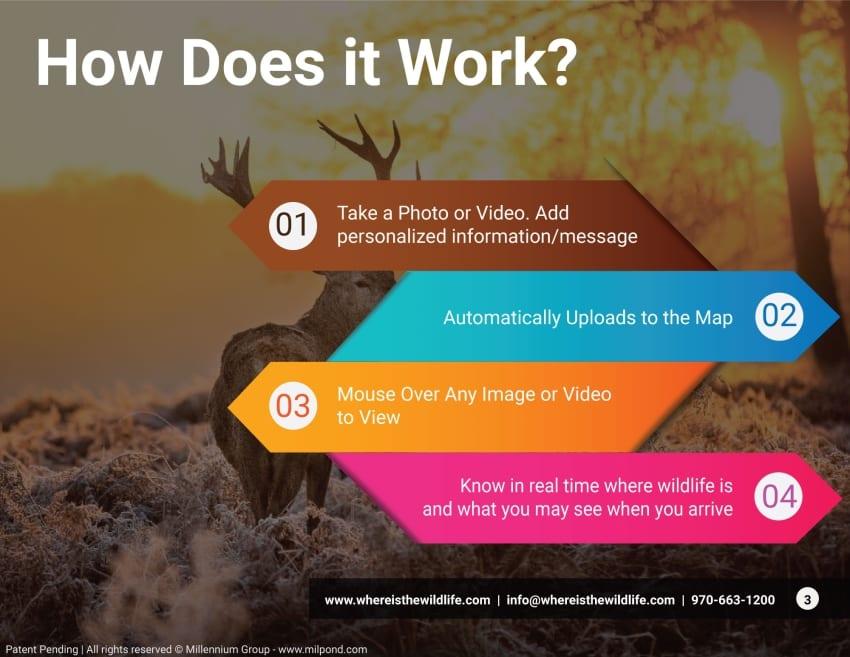 wildlife app features