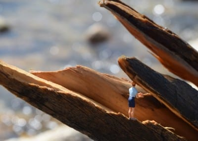 Tiny Tourists - Whereisthewildlife.com