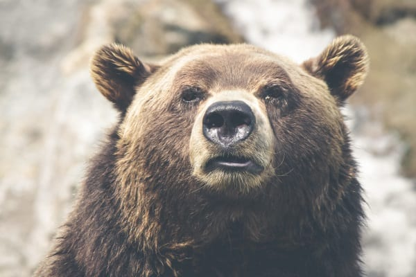 poaching in the US: grizzly