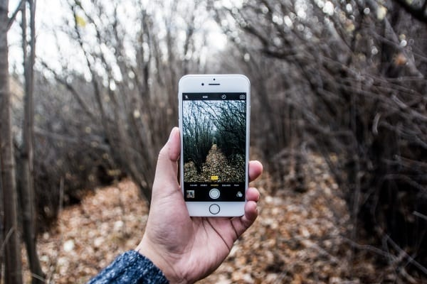 5 Wildlife Apps to Use With Ours